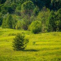 Елочка на поляне :: Андрей Гриничев