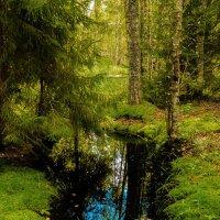 лесной водоем :: AVI
