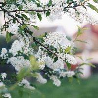 Весной... :: Елена Грицанова