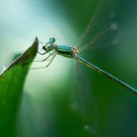 dragonfly :: Александр Довгий
