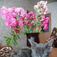 Котик удобно расположился в вазе :: Ольга Почепаева