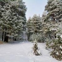 Белым снегом. :: Андрей Чиченин
