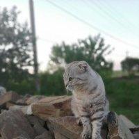 Томас :: Ольга Почепаева