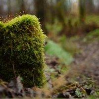 Лесной пенёк :: Ekaterina Karbo