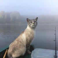 Рыбалка не ждет!.. :: Lyudmyla Pokryshen