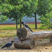 Деловые вороны :: Liliya Kharlamova
