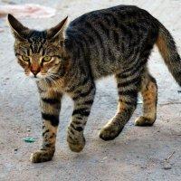 Ну очень серьезный котенок (на улице Воронежа). :: Галина Aleksandrova