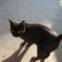 Черный кот. :: Зинаида