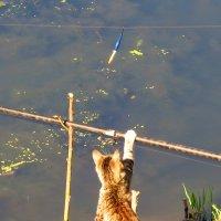 Кот на рыбалке :: Андрей Снегерёв