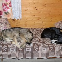 Собаки спят :: Александр Протопопов