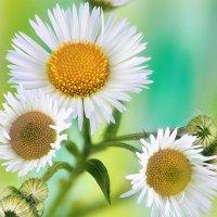 Цветочное :: dp_tula