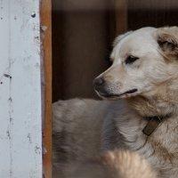 Собака ищет дом! :: Александр Протопопов