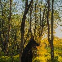 """из серии """" Про собаку и про Свет"""" :: Евгений Молчановский"""