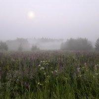Туман после двух дней ливневых  дождей :: Лара Симонова