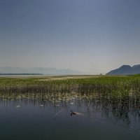 Утро на Скадарском озере... Черногория! :: Александр Вивчарик