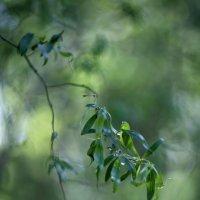 Листочки присели на ветку... :: юрий