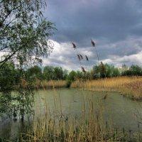 Дождливым летним днём... :: Сергей Iv