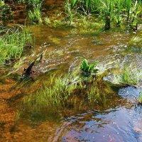 Родниковой жизнью полнится ручей... :: Лесо-Вед (Баранов)