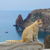 Монастырский кот Фиолента :: Наталия Григорьева