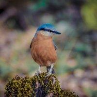 Птичка-невеличка :: Русс Род