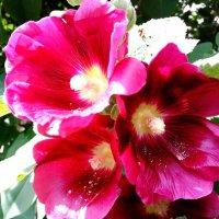 Цветы лета. :: Maryana Petrova