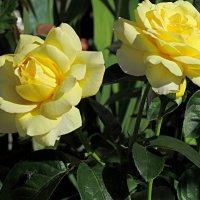 Ей тоже нравятся цветы :: Валентин Семчишин