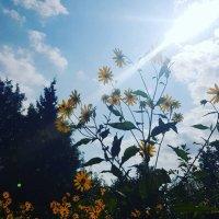 Ослепительная красота :: Наталья Горшкова