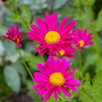 Июньское разноцветье :: Елена Митряйкина