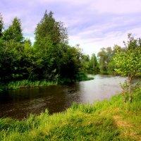 Хорошо у речки летом... :: Нэля Лысенко