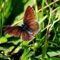 и бабочка :: Ольга Мутовина