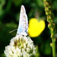бабочка :: Ольга Мутовина