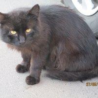 Уличный кот,многодетный отец. :: Зинаида