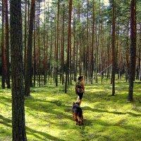 Лесные прогулки :: Нина