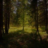 Дивный свет июня... :: Sergey Gordoff