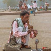 Indian snake charmer :: Евгений Бубнов