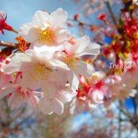 Весна :: Iren Ko