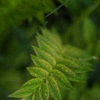 Прекрасная природа Севера :: Анна Приходько
