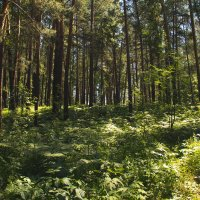 Июньский лес :: Вадим Басов