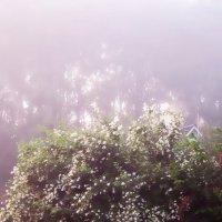 Сиреневый туман :: Tanja Gerster