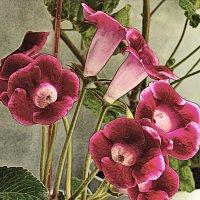 Дружно цветём :: Nikolay Monahov