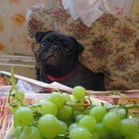 Моника и виноград. :: Зинаида