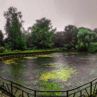 Летний дождь на пруду. :: Василий Ярославцев