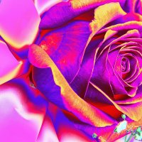 Роза. :: Штрек Надежда