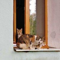 Суровые ребята из нашего двора :: Николай Белавин