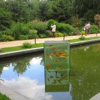 Надводный аквариум Аптекарского огорода :: olgadon Довженко