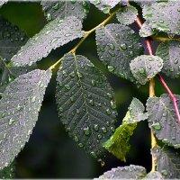 Летний дождь.. :: Александр Шимохин