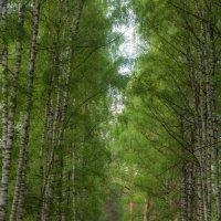 Трое и лес :: Алексей Медведев