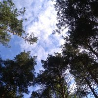 небо в лесу :: ЕР