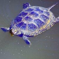 Черепаха :: Nina Streapan