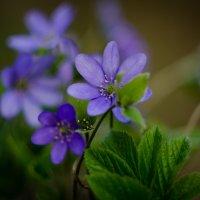 Цветок :: Marik ...